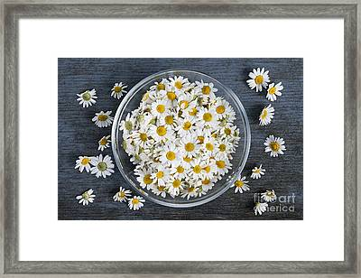 Chamomile Flowers In Bowl Framed Print by Elena Elisseeva