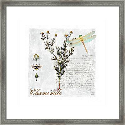 Chamomile Herb Dragonfly Botanical Illustration Art Framed Print by Tina Lavoie