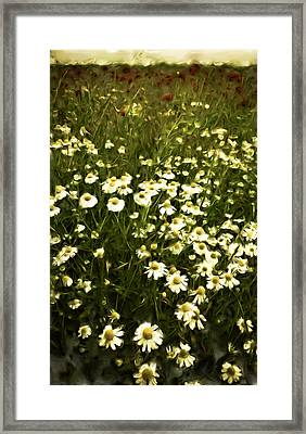 Framed Print featuring the painting Chamomile Lawn by Frank Tschakert