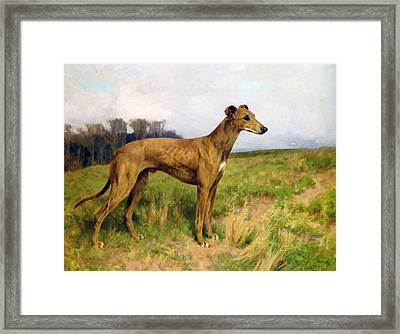 Champion Greyhound Dee Flint Framed Print by Arthur Wardle