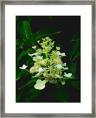 Chandelier 2 Framed Print by Michael Taggart II