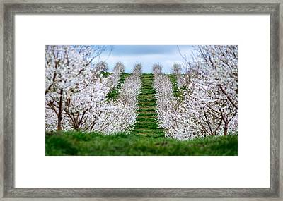 Change In Seasons  Framed Print