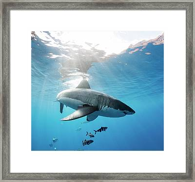 Change Of Direction Framed Print by Shane Linke