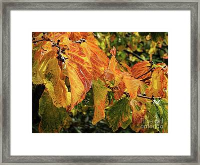 Framed Print featuring the photograph Changes by Peggy Hughes