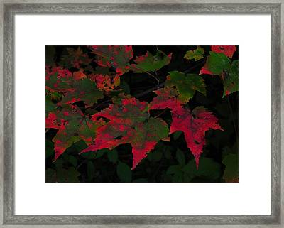 Changing Color Framed Print by JAMART Photography