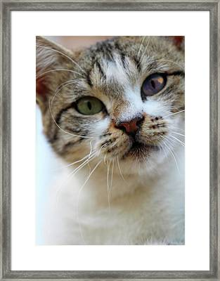 Framed Print featuring the photograph Changing Colors by Munir Alawi