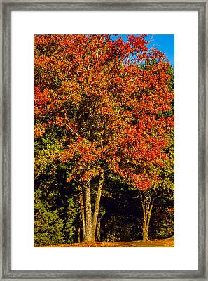 Changing Colors Of Autumn Framed Print by Barry Jones