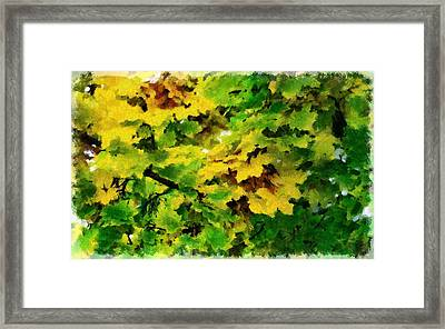 Changing Leaves Framed Print by Russ Harris
