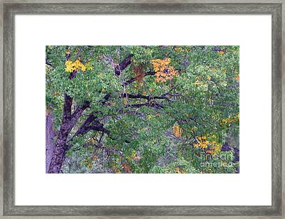 Changing Of The Seasons Framed Print by Mary Deal