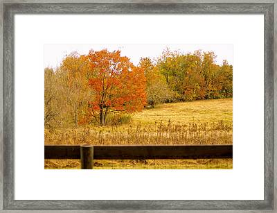 Changing Seasons Of Chester County Framed Print