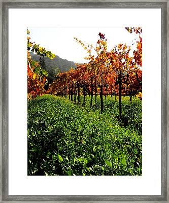 Changing Vines Framed Print