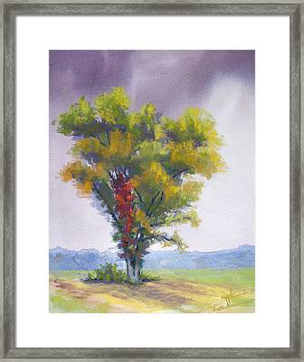 Changing Weather Changing Tree Framed Print by Christine Camp