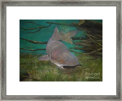 Channel Catfish Framed Print by Jackie Hill