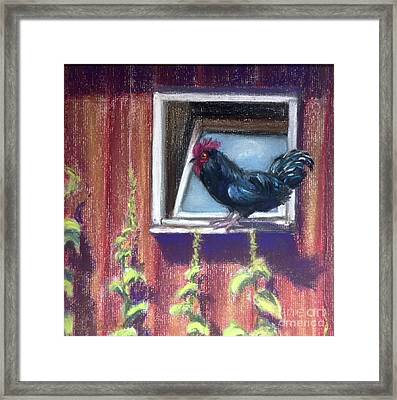 Chanticleer Framed Print