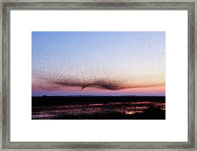 Chaos In Motion - Bird Of Many Birds Framed Print