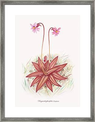 Chapman's Butterwort Framed Print by Scott Bennett