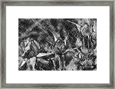 Charcoal Rosebuds Framed Print
