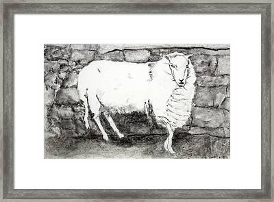 Charcoal Sheep Framed Print