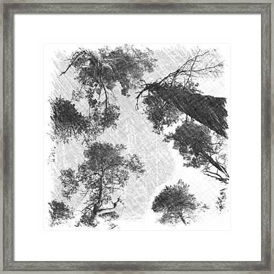 Charcoal Trees Framed Print by RKAB Works