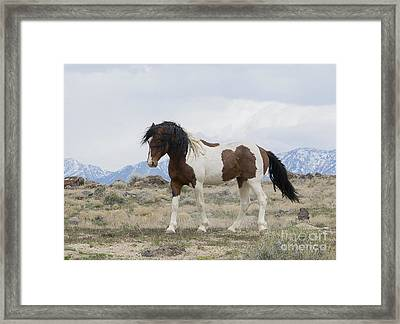 Charger Framed Print by Nicole Markmann Nelson