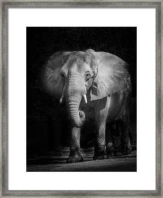 Charging Elephant Framed Print