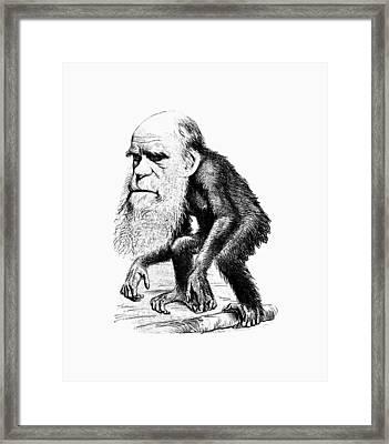 Charles Darwin As An Ape Cartoon Framed Print