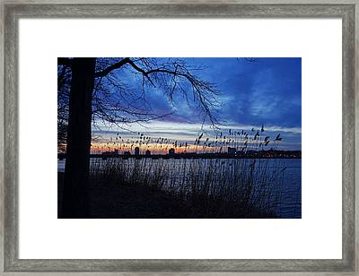 Charles River Sunset Tree Boston Ma Framed Print by Toby McGuire