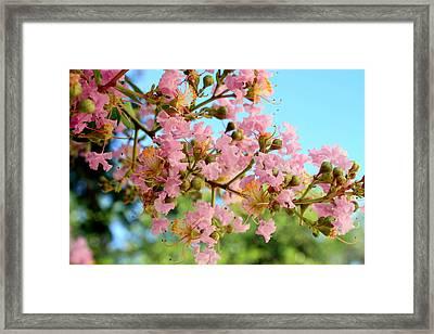 Charleston Blossoms Framed Print