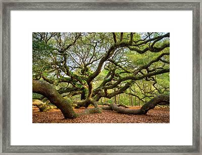 Charleston Sc Angel Oak Tree South Carolina Landscape Framed Print