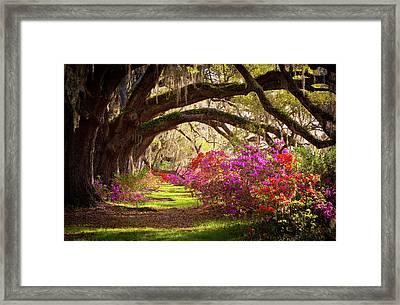Charleston Sc Magnolia Plantation Gardens - Memory Lane Framed Print