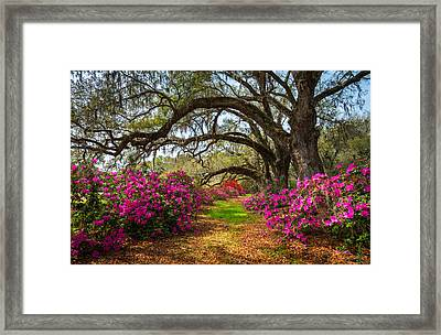 Charleston Sc Spring Flowers Scenic Landscape South Carolina  Framed Print