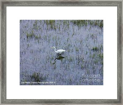 Charleston Wildlife 1 Framed Print
