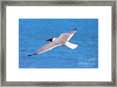 Charleston Wildlife. Seagull Framed Print
