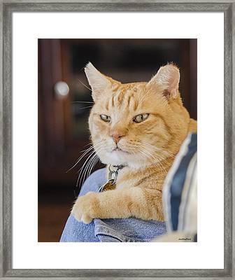 Charlie Cat Framed Print by Allen Sheffield