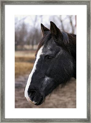Charlie Head Study Framed Print by Laurie With