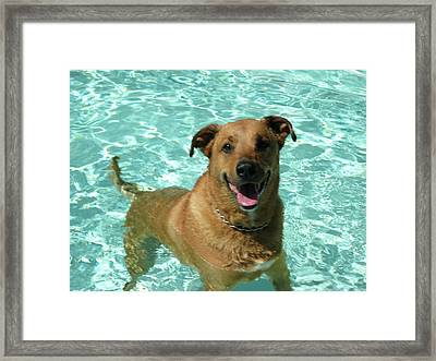 Charlie In Pool Framed Print