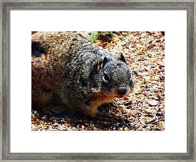 Framed Print featuring the photograph Charlie by Joseph Frank Baraba