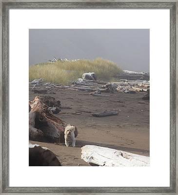 Charlie On Irish Beach Framed Print