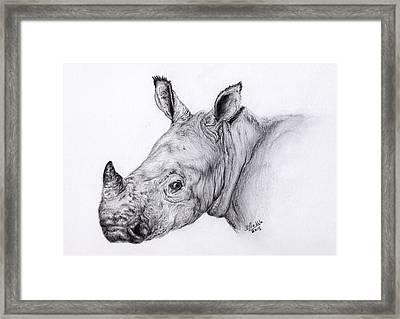 Charlie The Orphaned White Rhino Framed Print by Jen Prebble