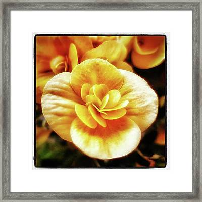 Framed Print featuring the photograph Charlie's Begonias. He Grows Them On by Mr Photojimsf