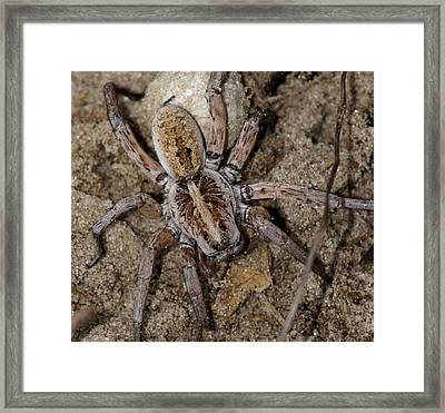 Charlotte Framed Print by Debbie May