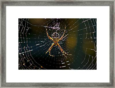 Framed Print featuring the photograph Charlotte's Web by Thanh Thuy Nguyen
