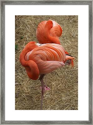 Charming Framed Print