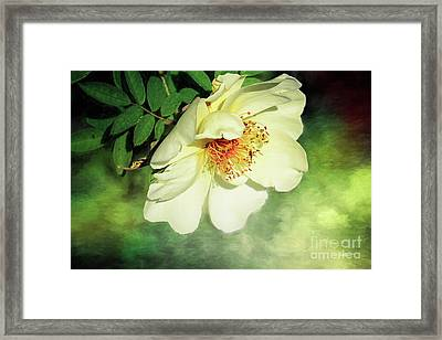 Charming Framed Print by Jutta Maria Pusl