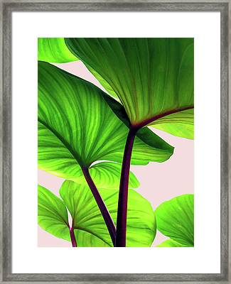 Charming Sequence Framed Print