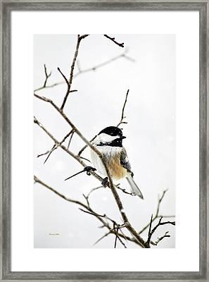 Charming Winter Chickadee Framed Print