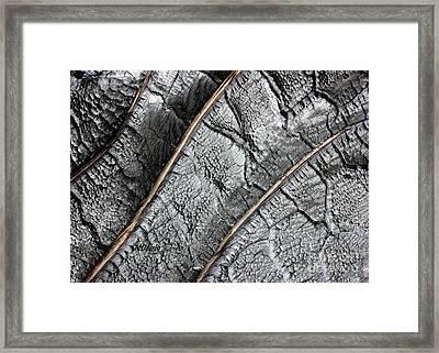Charred Pine Bark Framed Print