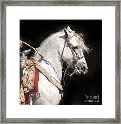 Charro Stallion Framed Print by Jim and Emily Bush