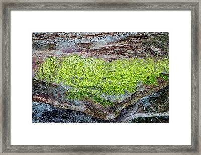 Chartreuse Abstraction Framed Print