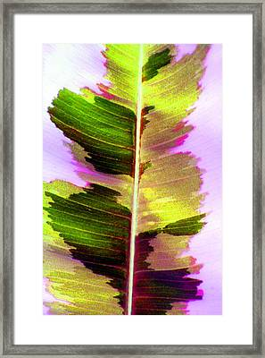 Chartreuse Framed Print by Carolyn Stagger Cokley